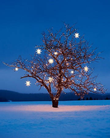 christmas tree with star lights