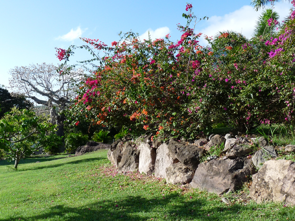 montpelier nevis grounds