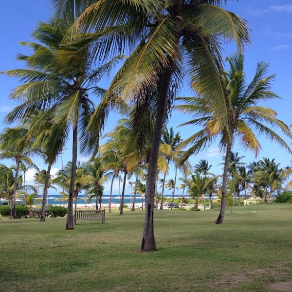 nisbet-palm-trees