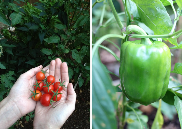 cherry-tomatoes-and-bell-peppers