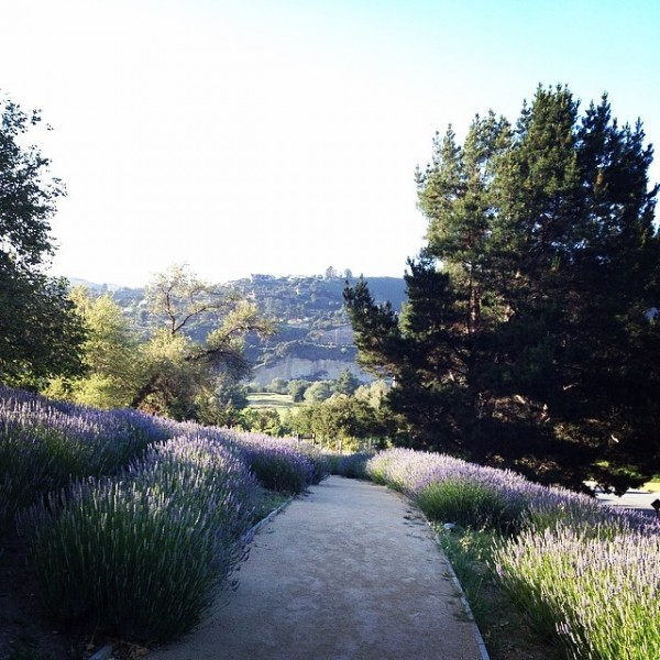 carmel-valley-ranch-lavender