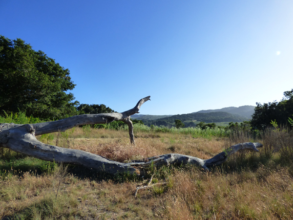 carmel-valley-hike