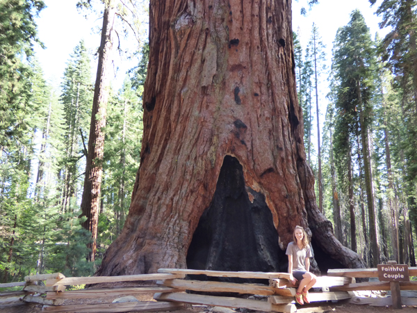 faithful-couple-sequoia