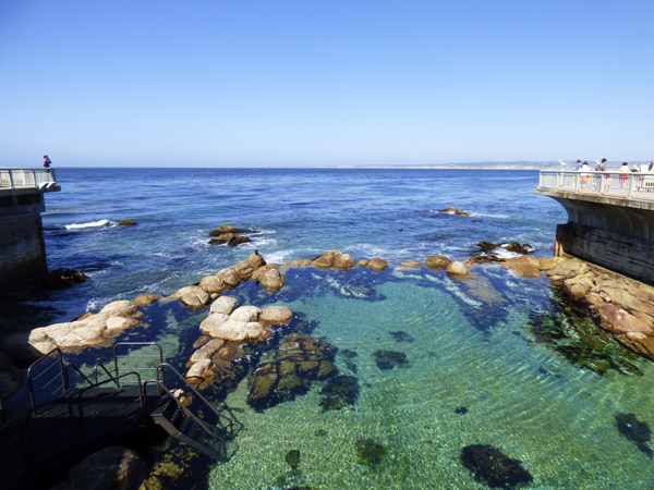 monterey-aquarium-tide-pool