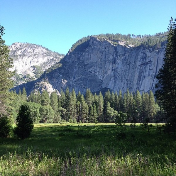 yosemite-meadow