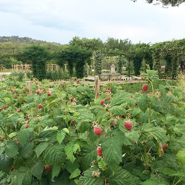 raspberry-fields